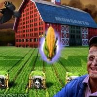 Monsanto y sus transgénicos: ensayando el agrogenocidio global